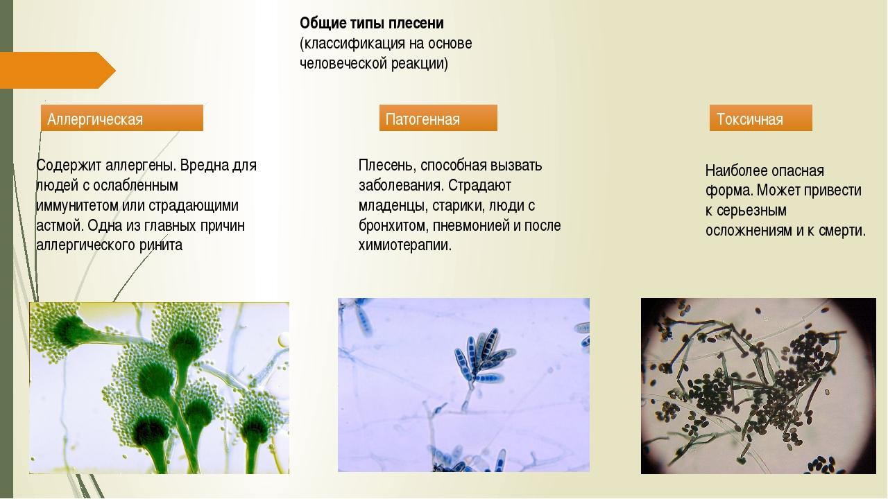 Общие типы плесени (классификация на основе человеческой реакции) Аллергическ...