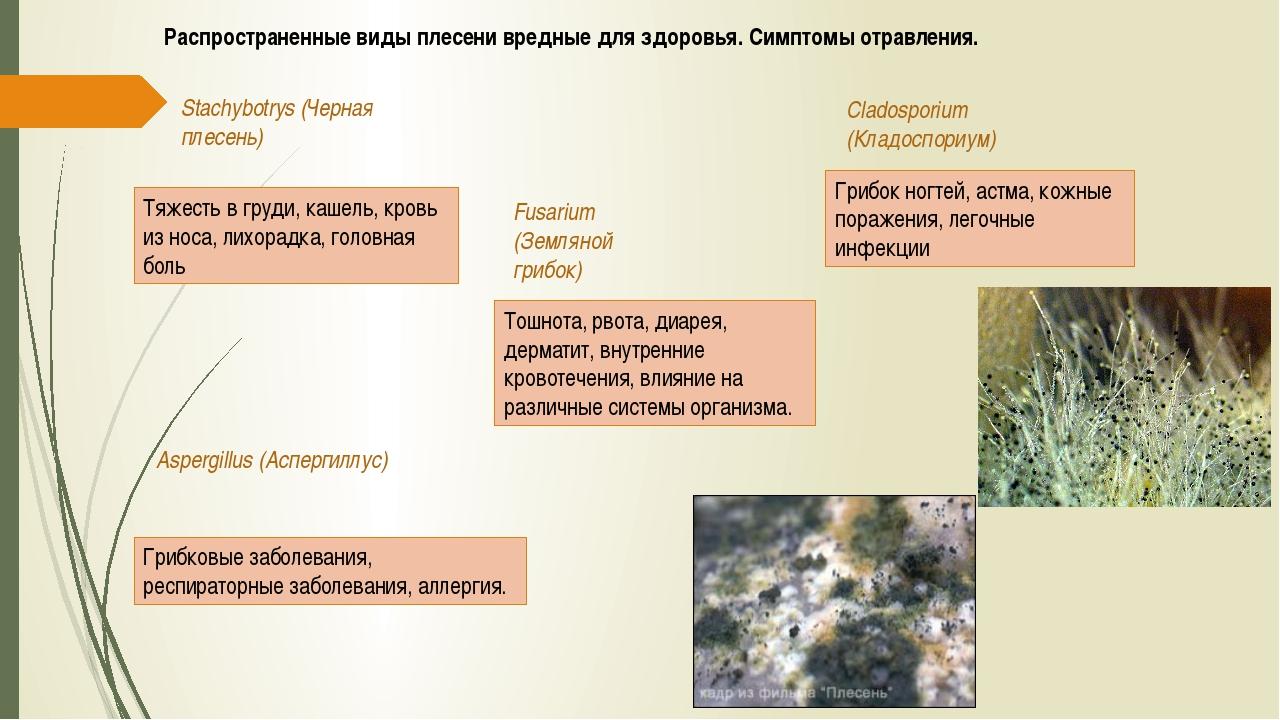 Распространенные виды плесени вредные для здоровья. Симптомы отравления. Stac...