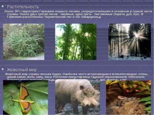 Растительность Около 30% территории Германии покрыто лесами, сосредоточенными