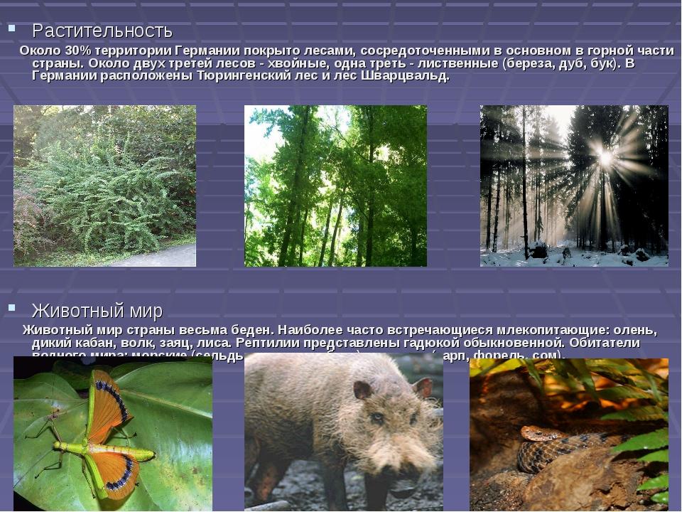 Растительность Около 30% территории Германии покрыто лесами, сосредоточенными...