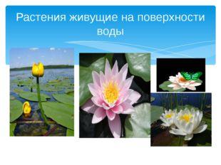 КК Растения живущие на поверхности воды