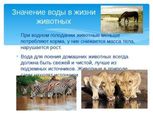 При водном голодании животные меньше потребляют корма, у них снижается масса