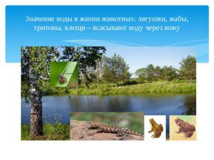 Значение воды в жизни животных: лягушки, жабы, тритоны, клещи – всасывают во