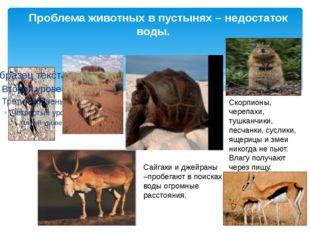 Проблема животных в пустынях – недостаток воды. Скорпионы, черепахи, тушканч