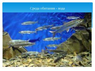 Среда обитания - вода