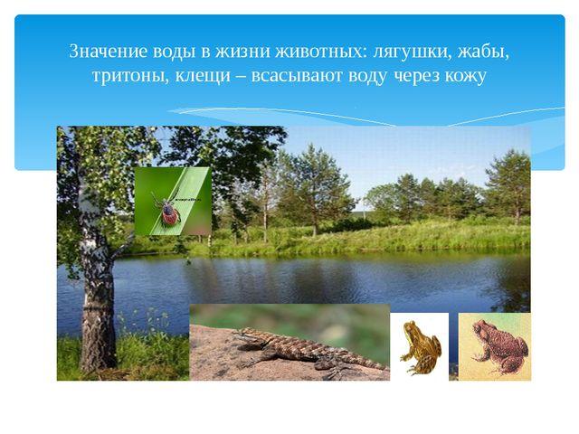 Значение воды в жизни животных: лягушки, жабы, тритоны, клещи – всасывают во...