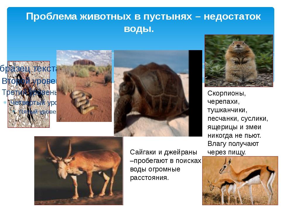 Проблема животных в пустынях – недостаток воды. Скорпионы, черепахи, тушканч...