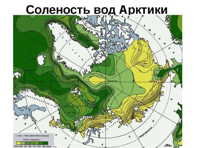Соленость вод Арктики