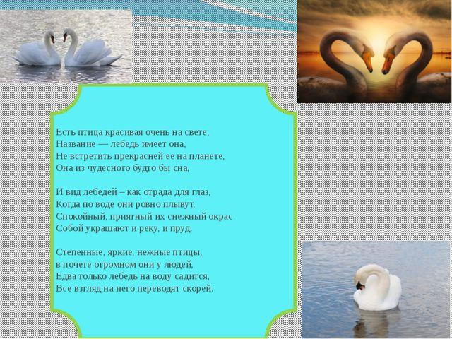 Есть птица красивая очень на свете, Название — лебедь имеет она, Не встретит...