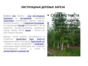 ЛИСТОПАДНЫЕ ДЕРЕВЬЯ: БЕРЕЗА Берёза (лат. Bétula) — род листопадных деревьев и