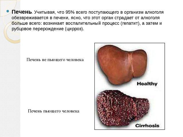 Печень. Учитывая, что 95% всего поступающего в организм алкоголя обезвреживае...