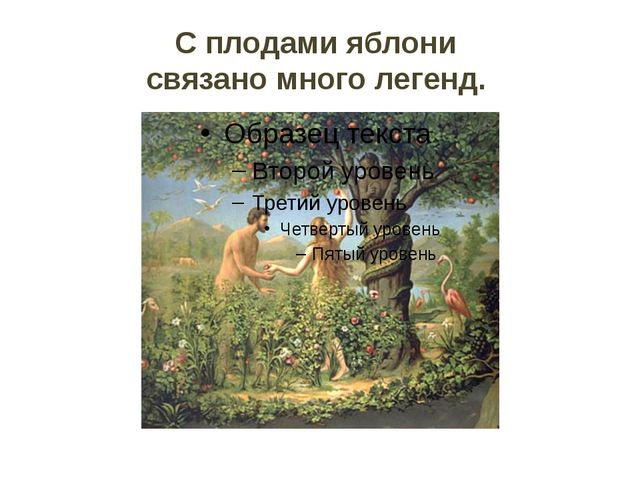 С плодами яблони связано много легенд.