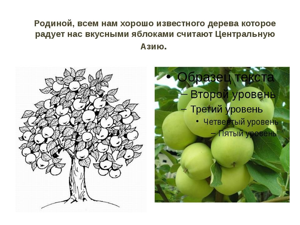 Родиной, всем нам хорошо известного дерева которое радует нас вкусными яблока...