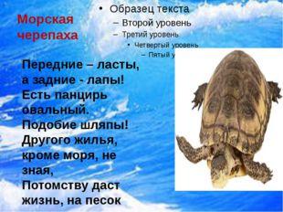 Морская черепаха Передние – ласты, а задние - лапы! Есть панцирь овальный. П