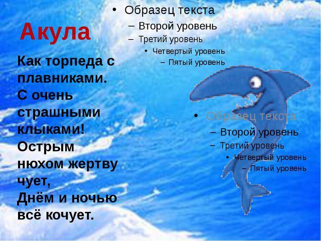 Акула Как торпеда с плавниками. С очень страшными клыками! Острым нюхом жертв...