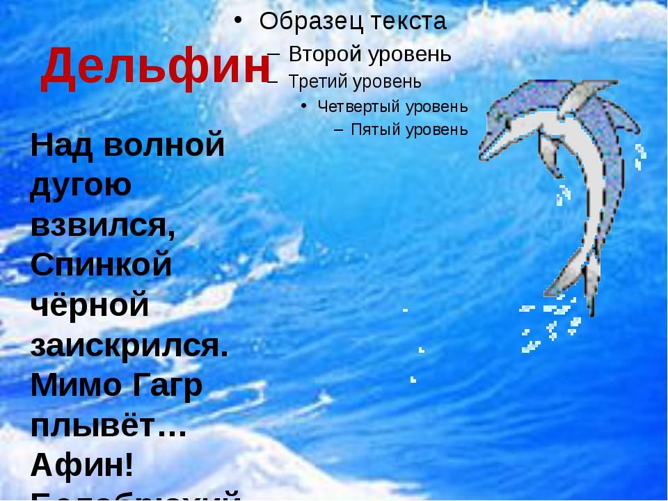 Дельфин  Над волной дугою взвился, Спинкой чёрной заискрился. Мимо Гагр плыв...