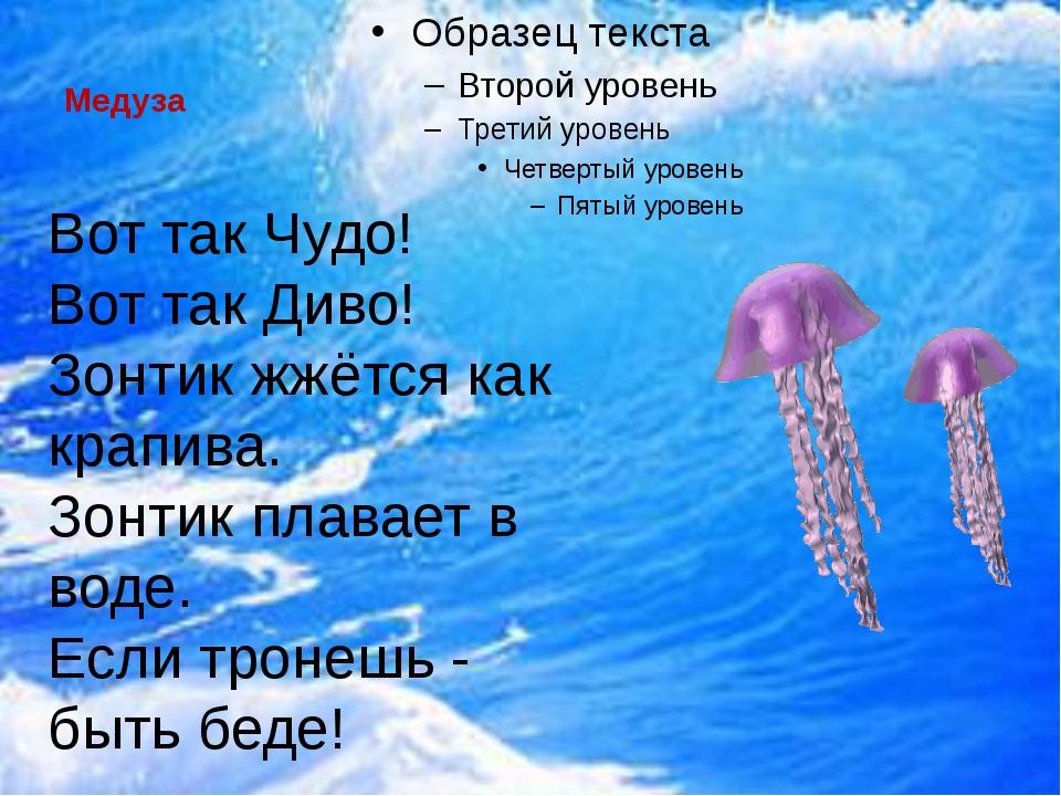 Медуза  Вот так Чудо! Вот так Диво! Зонтик жжётся как крапива. Зонтик плава...
