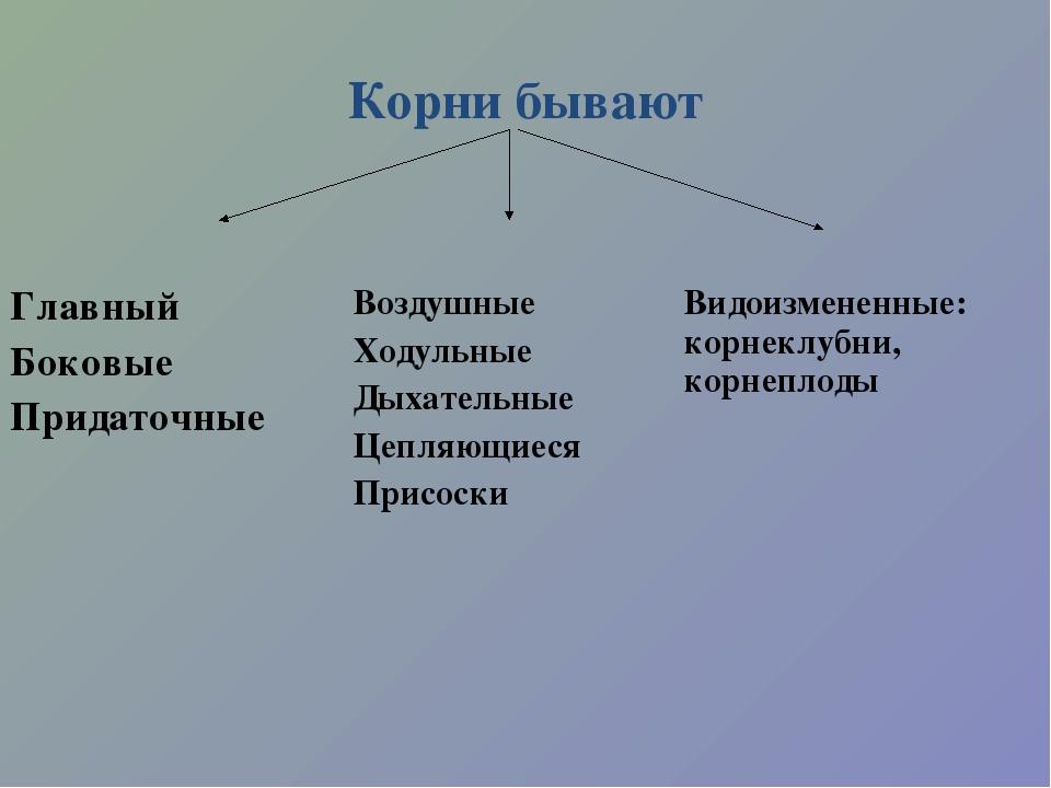 Корни бывают Главный Боковые ПридаточныеВоздушные Ходульные Дыхательные Цепл...