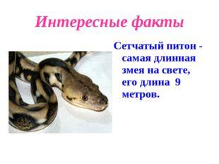 Интересные факты Сетчатый питон - самая длинная змея на свете, его длина 9 ме