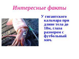 Интересные факты У гигантского кальмара при длине тела до 18м, глаза размером