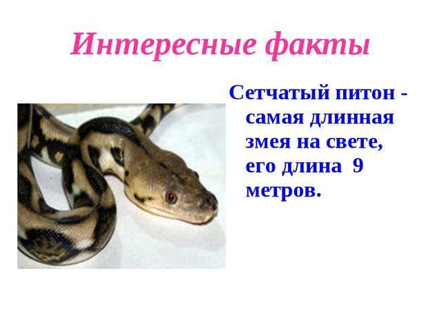Интересные факты Сетчатый питон - самая длинная змея на свете, его длина 9 ме...