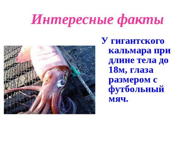 Интересные факты У гигантского кальмара при длине тела до 18м, глаза размером...