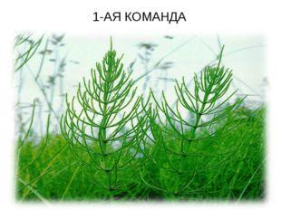 1-АЯ КОМАНДА
