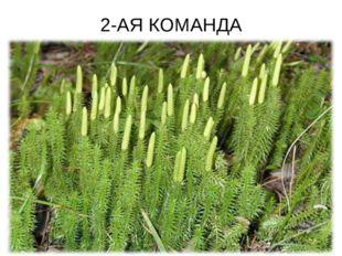 2-АЯ КОМАНДА
