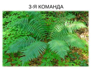 3-Я КОМАНДА