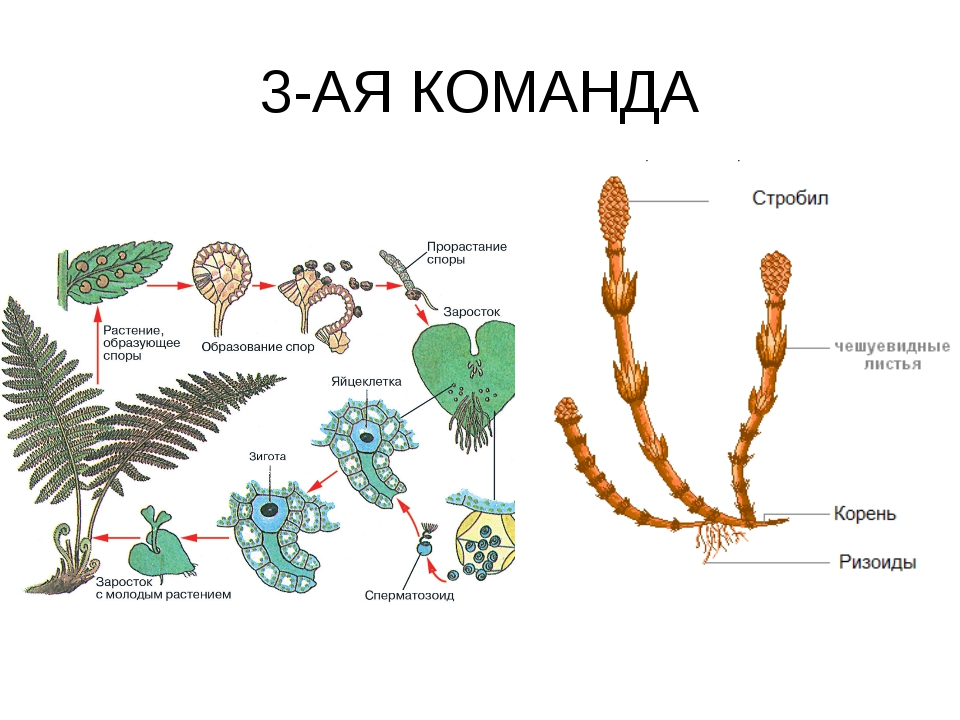 3-АЯ КОМАНДА