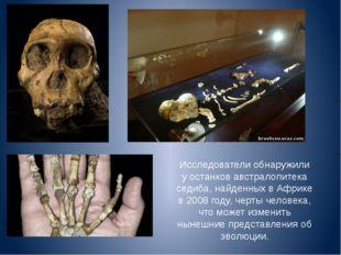 Исследователи обнаружили у останков австралопитека седиба, найденных в Африке