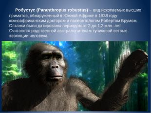 Робустус (Paranthropus robustus) -  вид ископаемых высших приматов, обнаружен