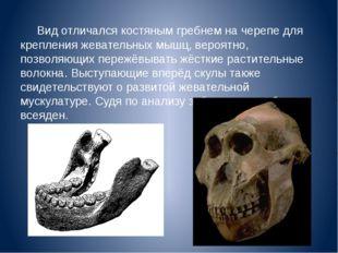 Вид отличался костяным гребнем на черепе для крепления жевательных мышц, веро
