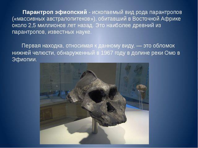 Парантроп эфиопский - ископаемый вид рода парантропов («массивных австралопит...