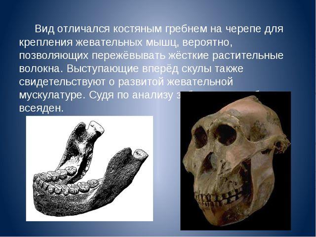 Вид отличался костяным гребнем на черепе для крепления жевательных мышц, веро...