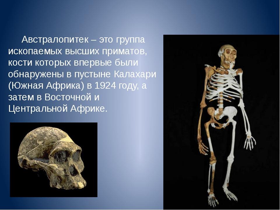 Австралопитек – это группа ископаемых высших приматов, кости которых впервые...
