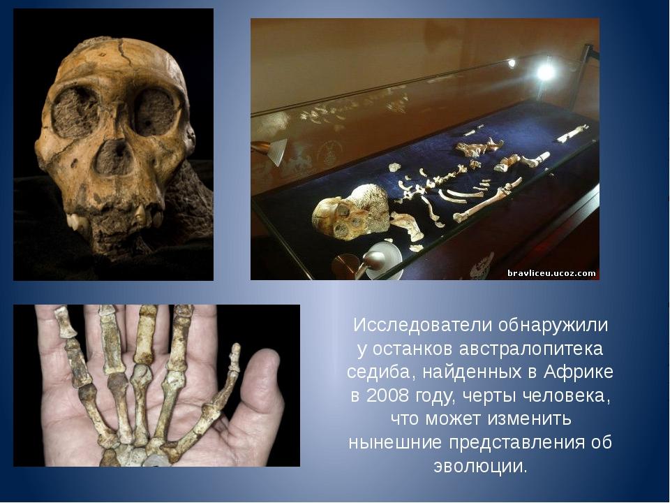 Исследователи обнаружили у останков австралопитека седиба, найденных в Африке...