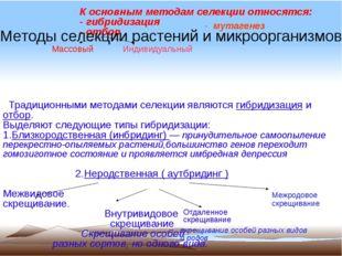 К основным методам селекции относятся: - гибридизация - отбор Традиционными м
