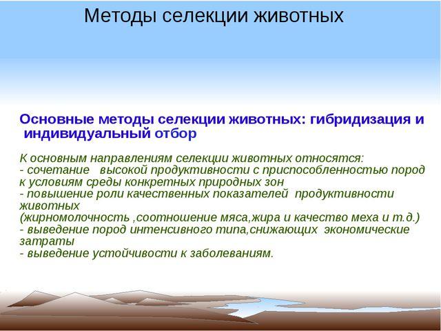Основные методы селекции животных: гибридизация и индивидуальный отбор К осн...