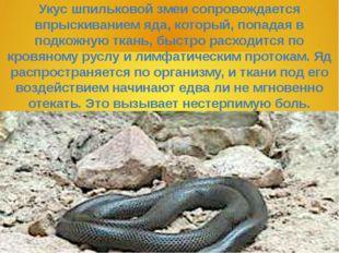 Укус шпильковой змеи сопровождается впрыскиванием яда, который, попадая в под