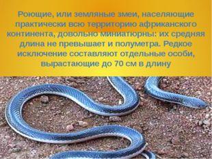Роющие, или земляные змеи, населяющие практически всю территорию африканского