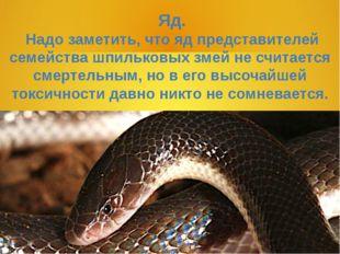 Яд. Надо заметить, что яд представителей семейства шпильковых змей не считае