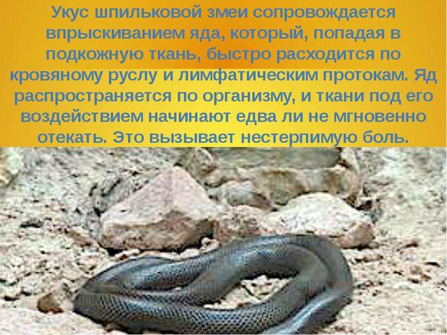 Укус шпильковой змеи сопровождается впрыскиванием яда, который, попадая в под...