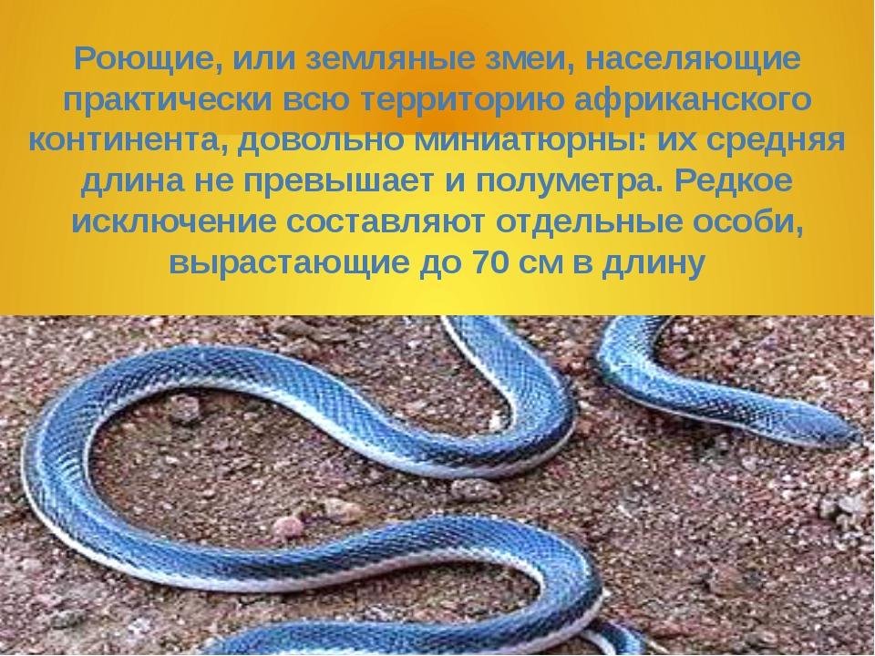 Роющие, или земляные змеи, населяющие практически всю территорию африканского...