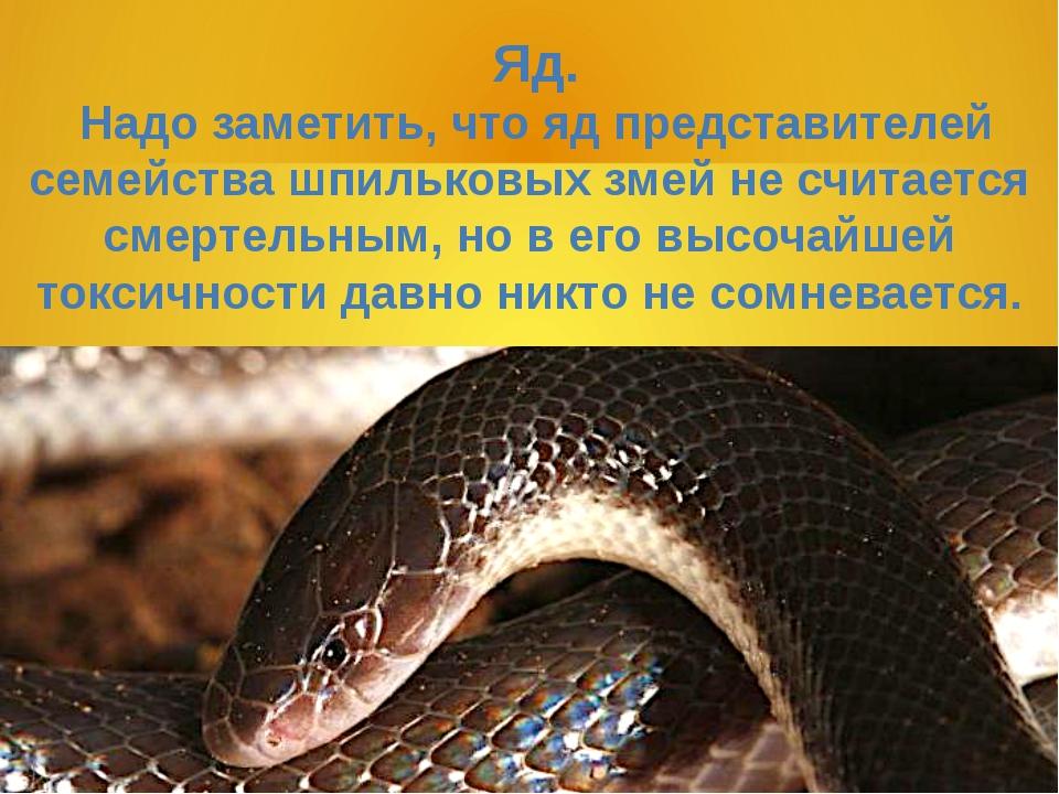 Яд. Надо заметить, что яд представителей семейства шпильковых змей не считае...