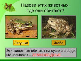 Назови этих животных. Где они обитают? Лягушка Жаба Эти животные обитают на с