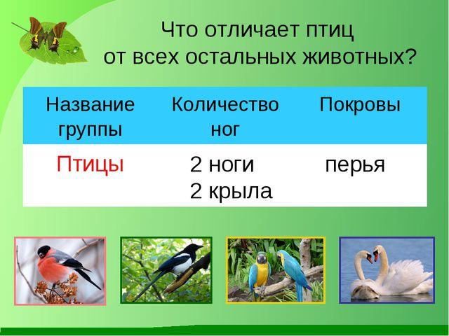 Что отличает птиц от всех остальных животных? 2 ноги 2 крыла перья Название г...