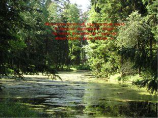 «Вот холм лесистый, над которым часто Я сиживал недвижим и глядел На озеро, в