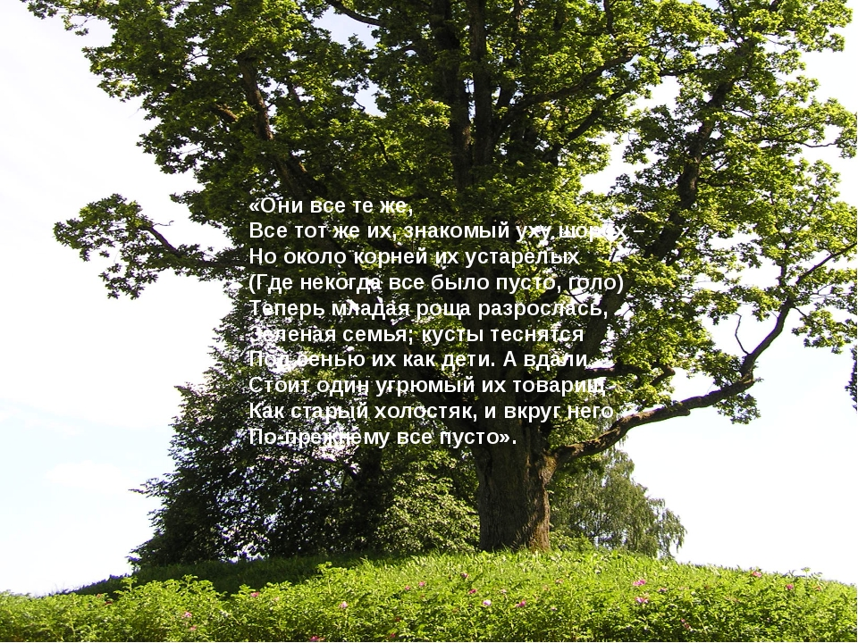 «Они все те же, Все тот же их, знакомый уху шорох – Но около корней их устаре...