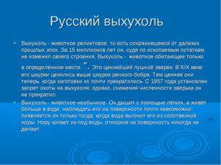 Русский выхухоль Выхухоль - животное реликтовое, то есть сохранившееся от дал